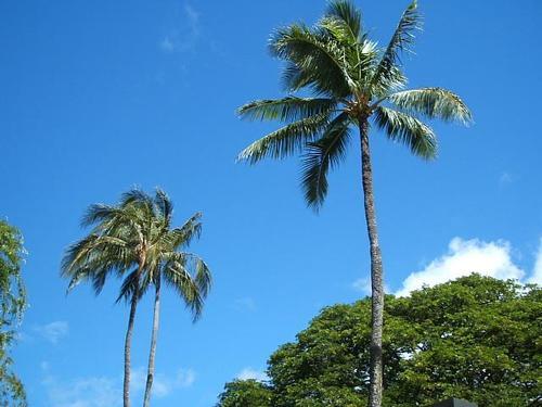 Hawaii1_004