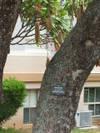 Trees_004