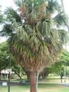 Trees_009