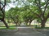 Trees_011