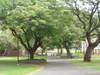 Trees_012